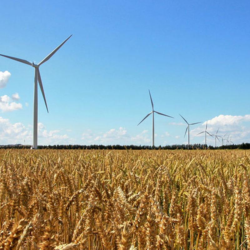 wheat fields and wind turbines