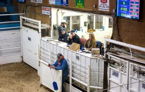 TORRINGTON LIVESTOCK MARKETS Slide Image