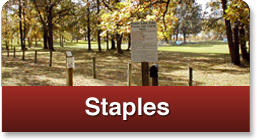 click here for staples